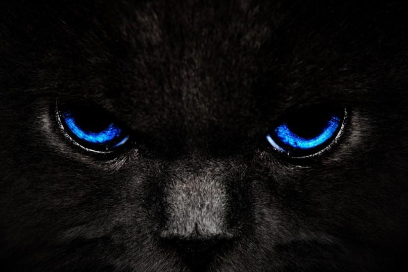 Free Wallpapers For Desktop | ... free. Get Black Cat Blue Eyes and