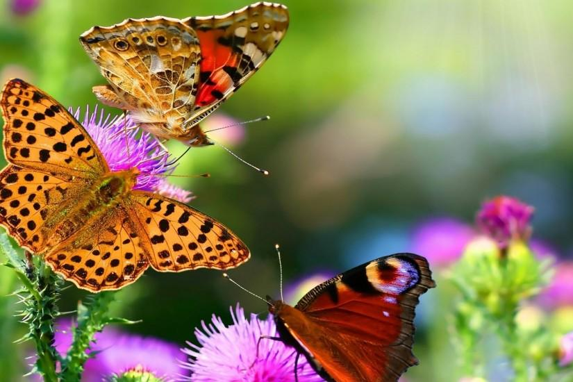 large butterfly wallpaper 1920x1080 samsung galaxy