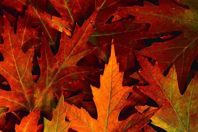 fall wallpapers 2560x1600 hd 1080p