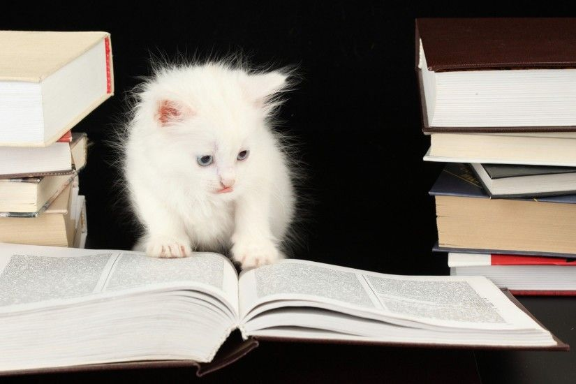 funny studying pictures 2 inspiration wallpaper hd ...