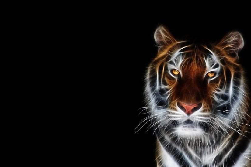 tiger face black background wallpaper