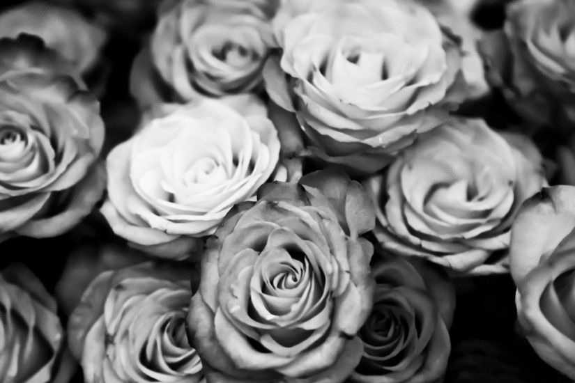 Black And White Roses Desktop Background. Download 1920x1200 ...