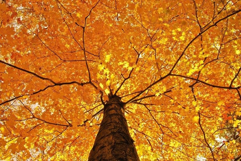 Woman Tree Autumn Photography Wallpapers Resolution : Filesize : kB, Added  on January Tagged : Woman tree