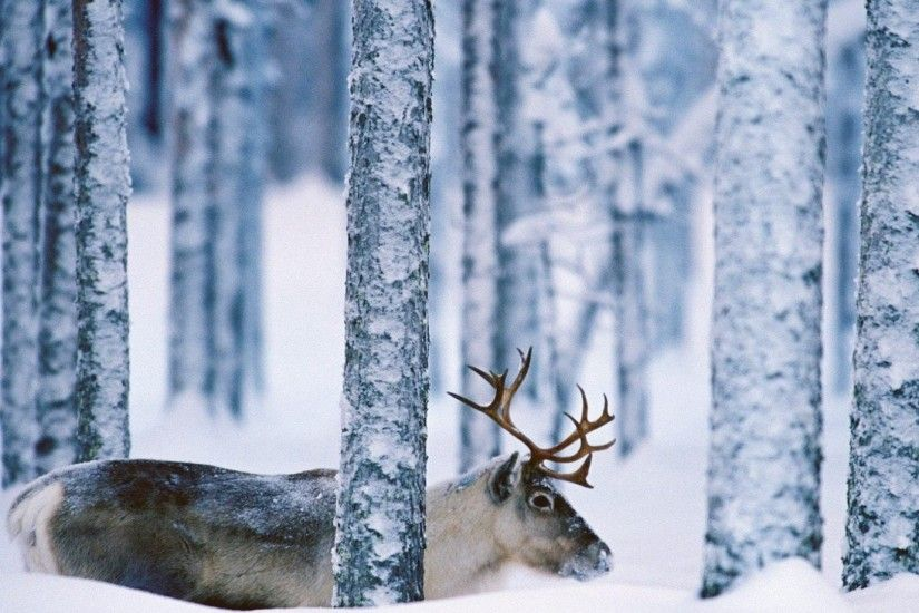 Deer Landscape Nature Winter Snow Funny Animals Desktop Wallpaper