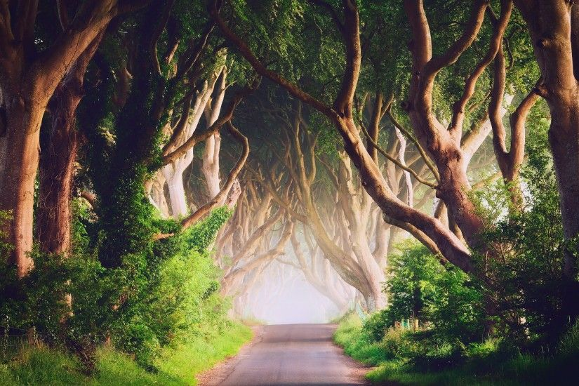 Ireland, Road, Trees, Landscape, Nature Wallpapers HD / Desktop and Mobile  Backgrounds
