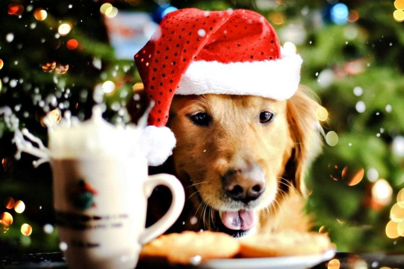 hd pics photos attractive christmas dog celebrations decorations festival  pet animals hd quality desktop background wallpaper