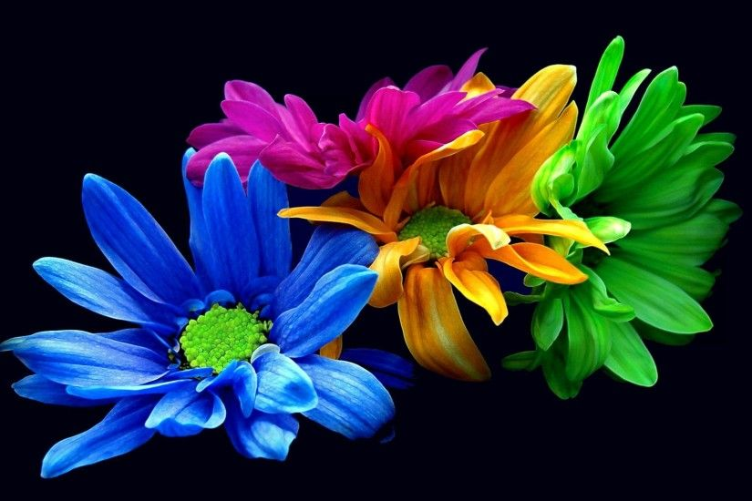 ... Colorful flowers HD Wallpaper 2560x1600
