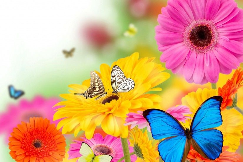 butterfly beautiful backgrounds desktop