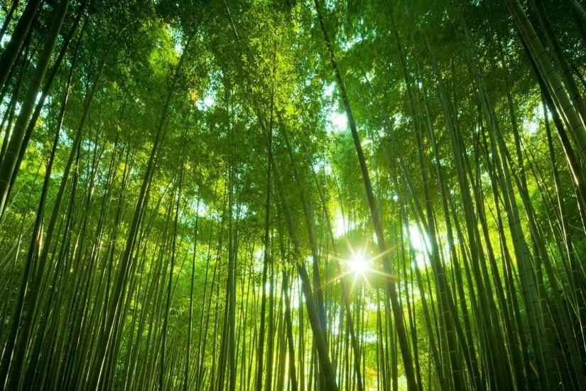download bamboo wallpaper 1920x1080 1080p