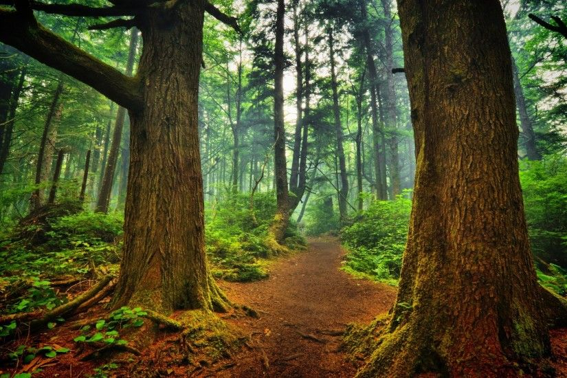 Forest Trail Wallpaper 23385 - Wallpapers landscape scenery .