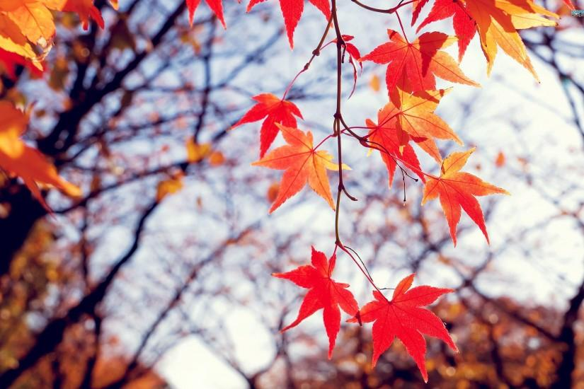 Fall Leaves Free Download HD Wallpapers