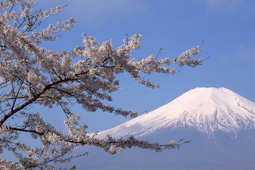 sakura snow mountain hd wallpapers