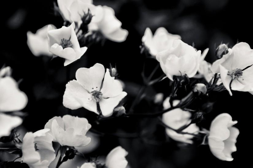 Black And White Roses Tumblr Backgrounds ...