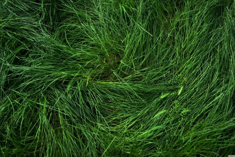 amazing grass wallpaper 3840x2160