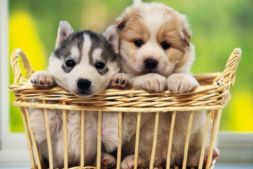 Cute Pair of Puppies Background
