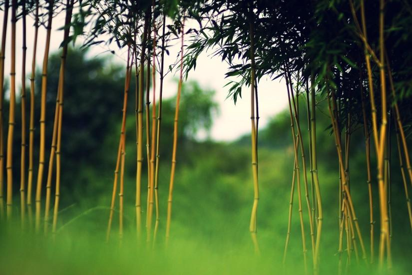 bamboo wallpaper 1920x1080 high resolution