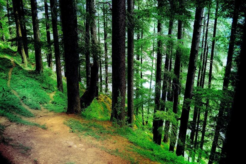 download free forest background 1920x1275 photo