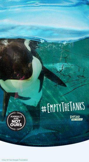 Download our FREE #EmptyTheTanks Wallpaper ...