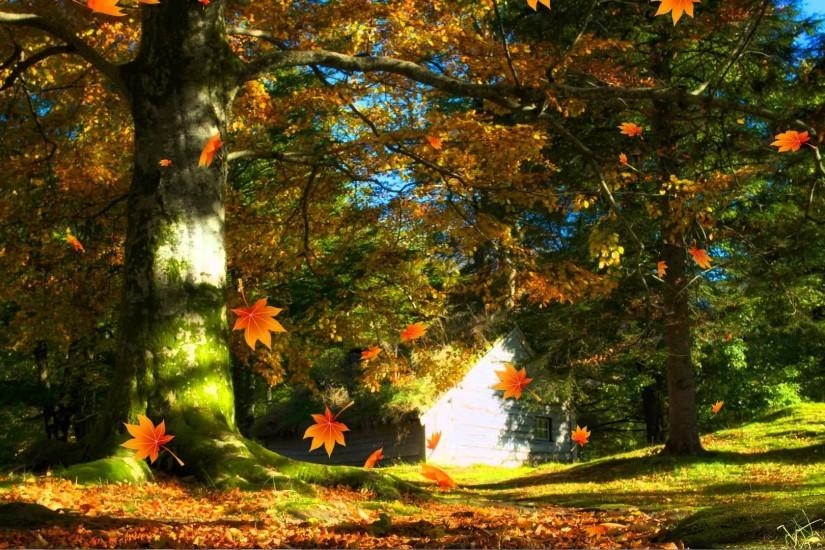 Falling Autumn Leaves Background loops