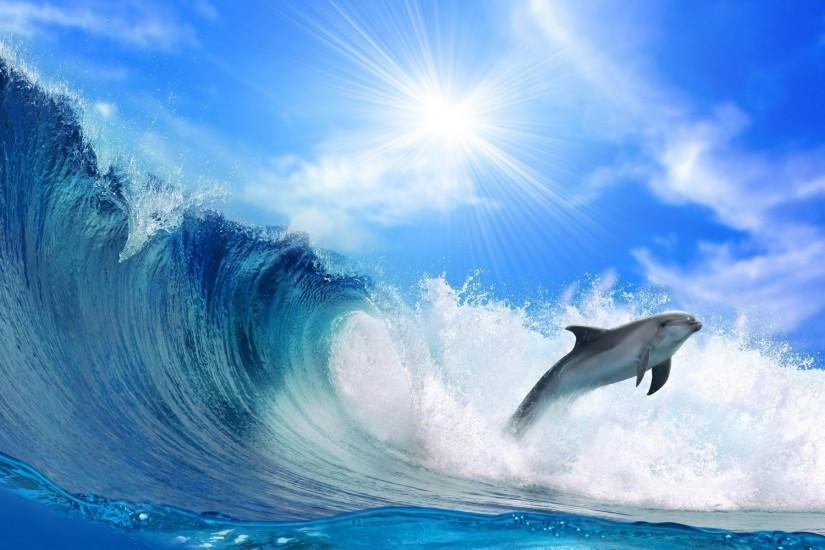 Dolphin Wallpapers | Best Wallpapers