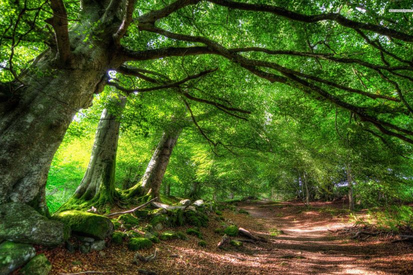 Green Forest & Path wallpapers and stock photos
