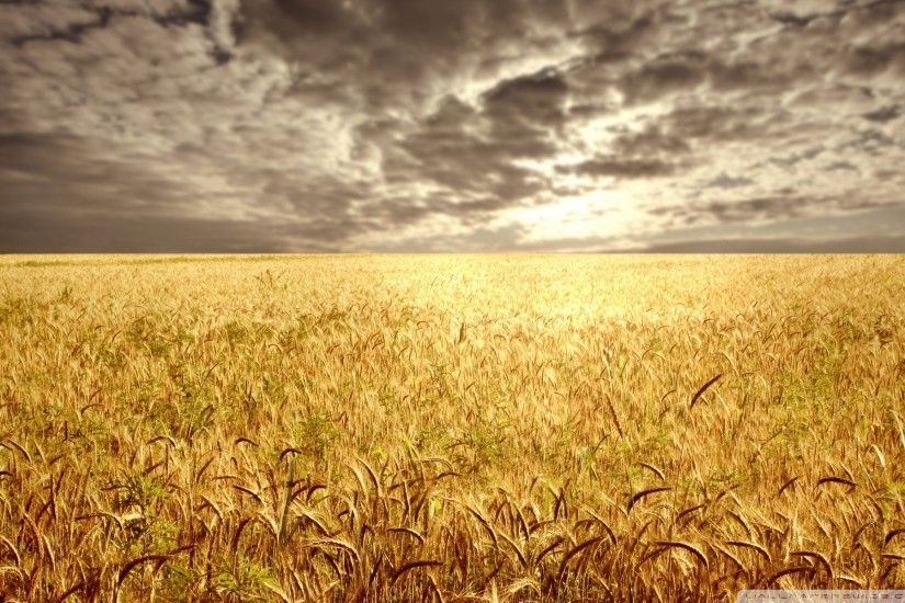 Sunset Over Wheat Field Wallpapers) – HD Desktop Wallpapers