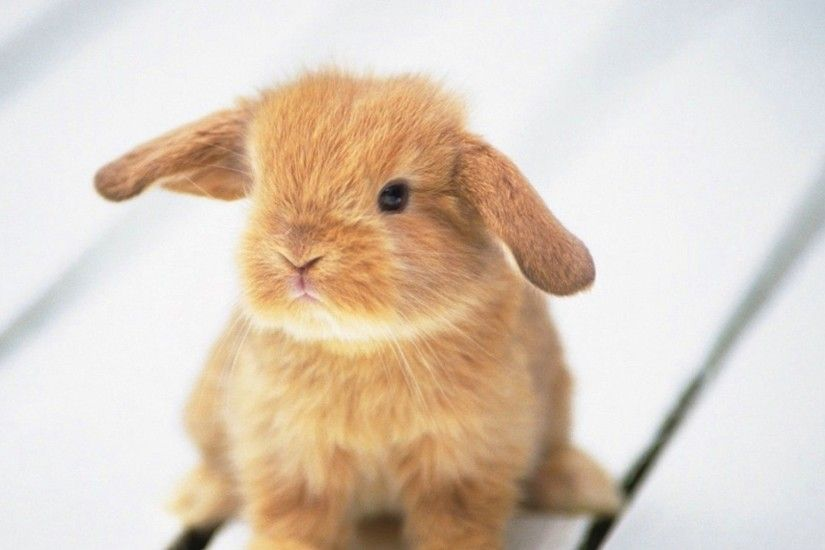 Cute Bunny Wallpapers HD Wallpapers | Wallpapers 4k | Pinterest | Wallpaper