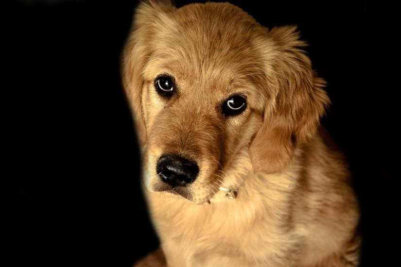 Sad Dog On A Black Background