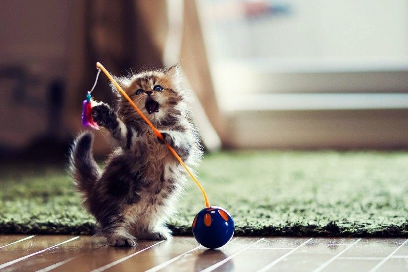 Funny Cat Playing 6 Desktop Wallpaper