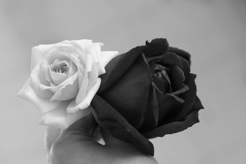 Images Roses Black White - HD Photos Gallery