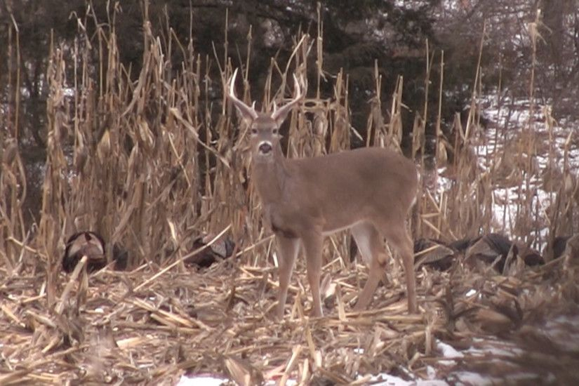 "Should hunters expect to see fewer deer in 2014 because of winter kill? The  Deer Severity Index says ""yes."""