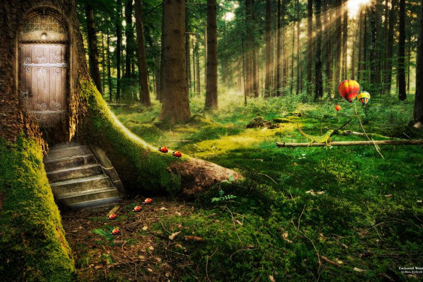 enchanted forest | Tree With a Door Enchanted Forest Hd wallpaper - HD  Wallpapers