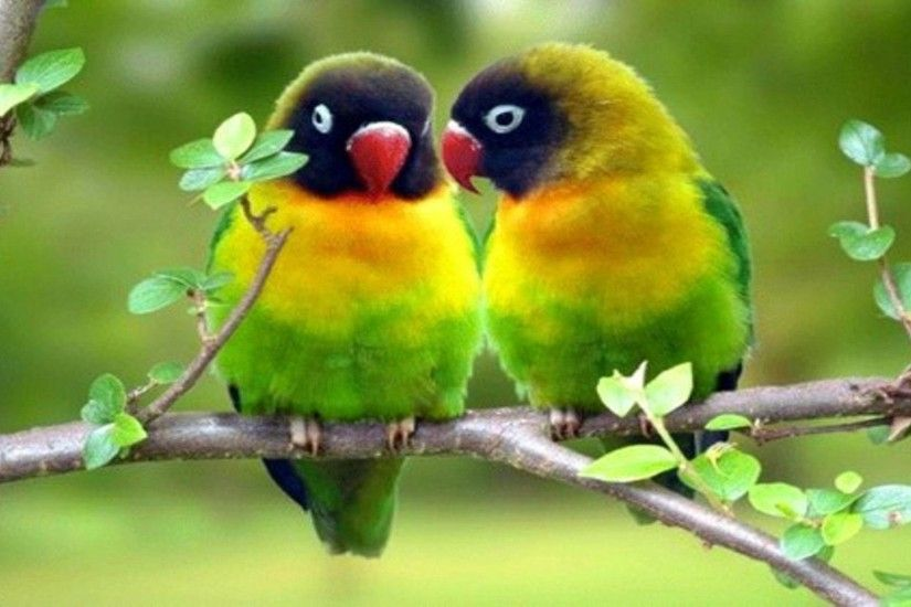 Cute Love Birds Wallpaper | Wallpaper Download