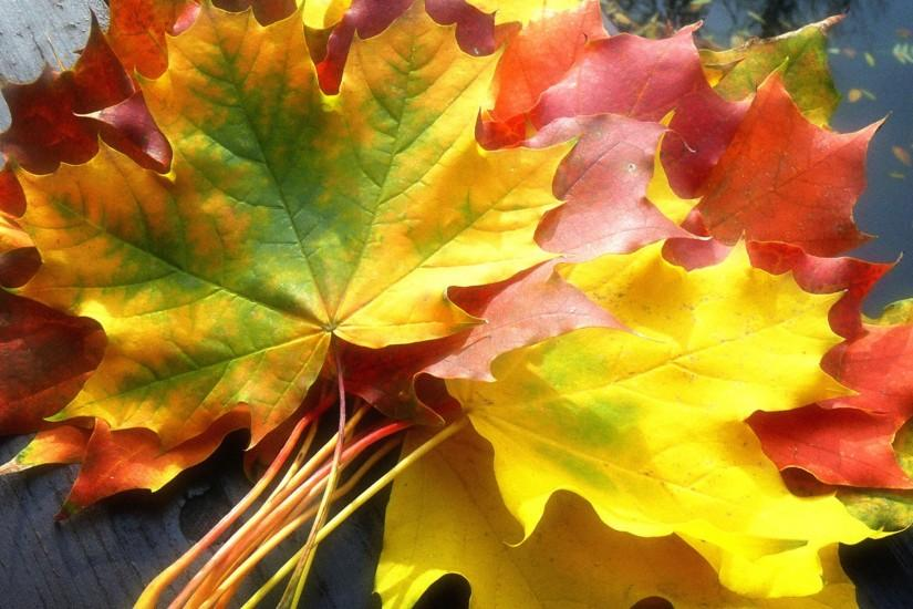 Fall Leaves Wallpaper Autumn Nature