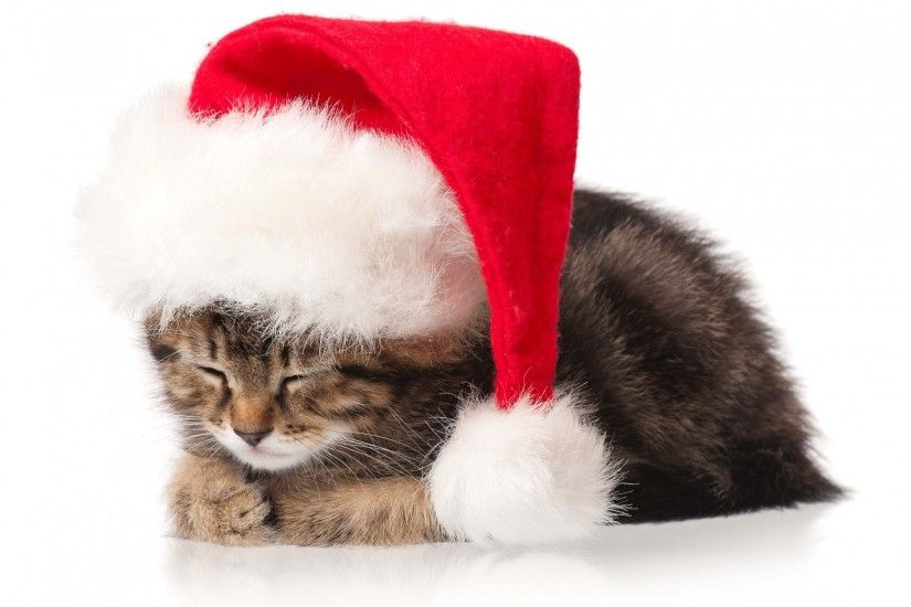 Cat Kitten Christmas Holidays New Year wallpaper by LadyGaga .