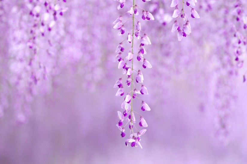 i love purple images | Download I Love Purple wallpaper 223915