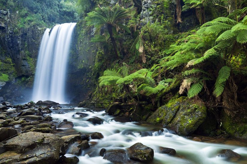 Forest Waterfall Wallpaper 8088