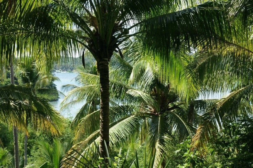 palm tree desktop wallpaper. HD Widescreen palm tree