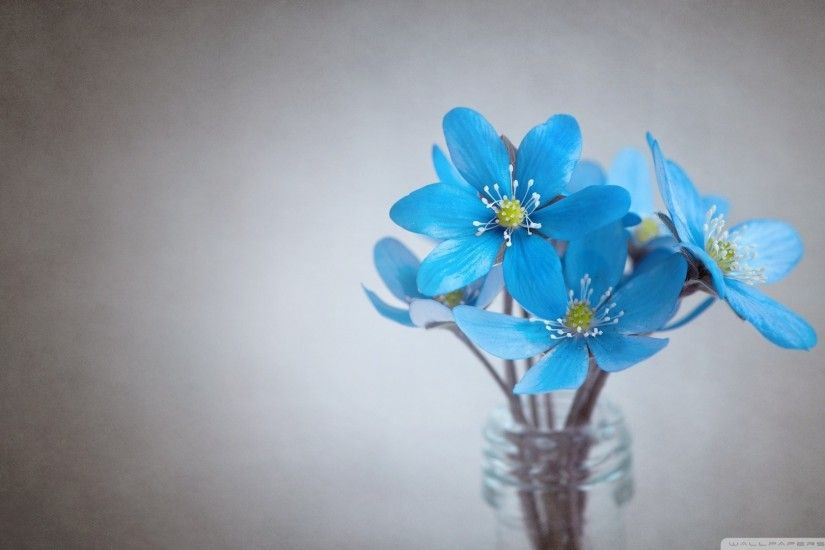 1920x1080 Small Blue Flowers HD Wide Wallpaper for Widescreen