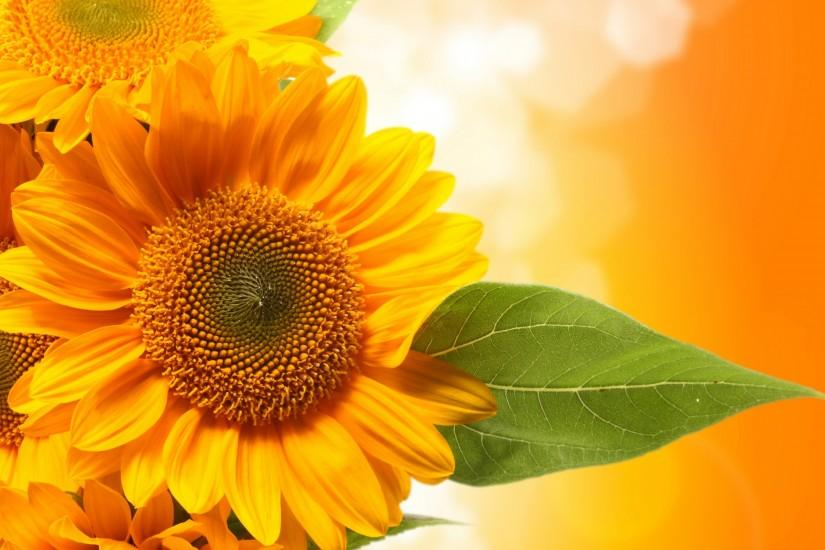 sunflower wallpaper 2880x1800 for 4k monitor