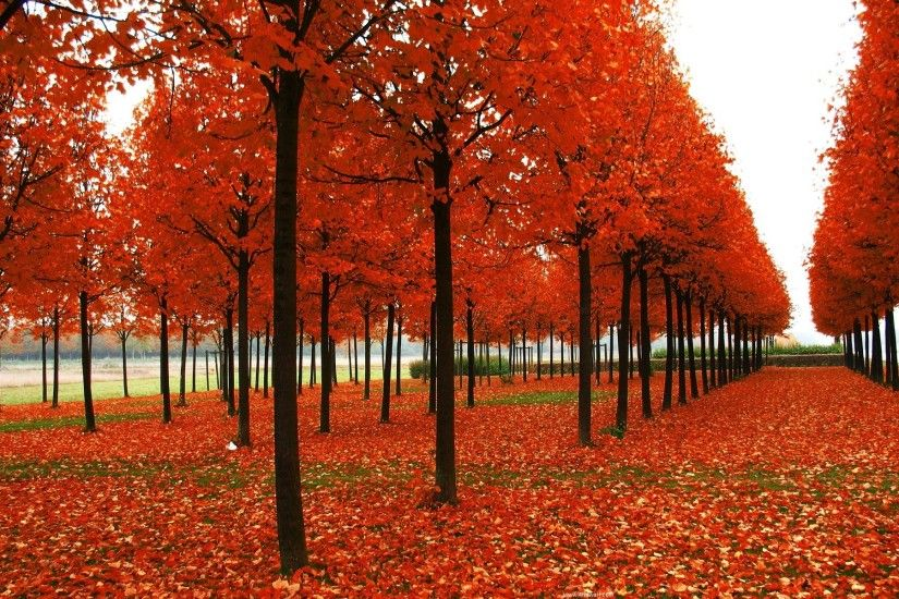 photos of seasons | Autumn season hd Wallpaper, Seasons of Autumn Wallpapers .