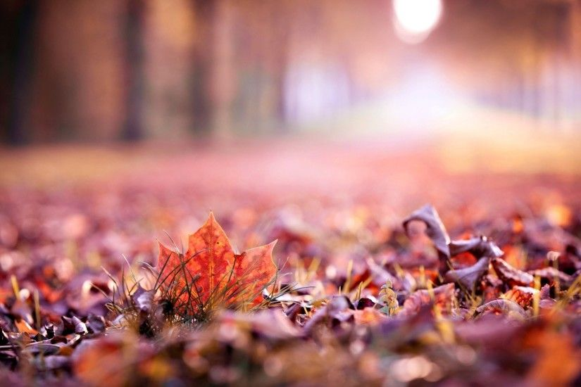 close up autumn leaves leaf leave macro blur beautiful wallpaper widescreen full  screen hd wallpapers background