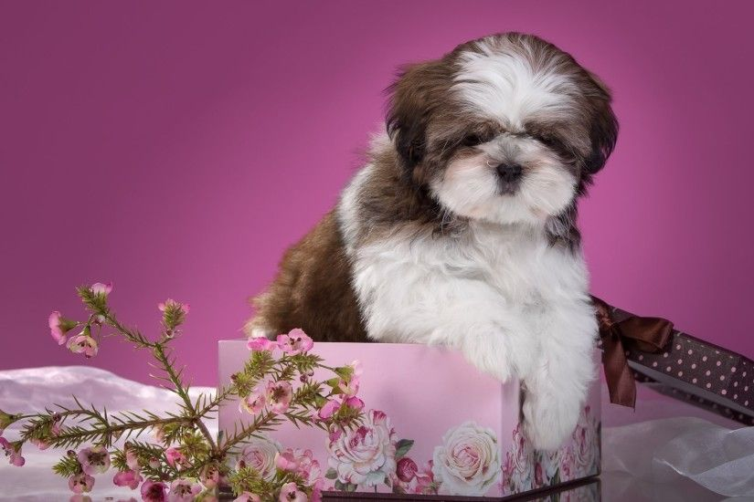 shih tzu puppy flower box