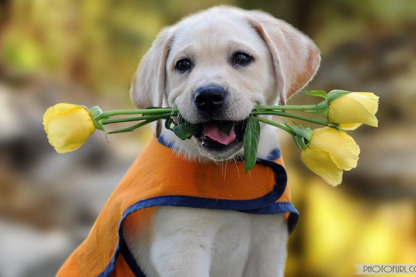 Cute Small Dogs HD Wallpapers