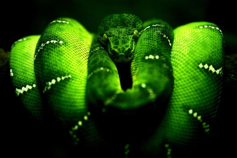 green-snake-hd-wallpaper-free-hd-for-desktop