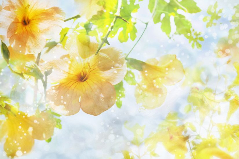 Wallpapers Yellow Flowers (40 Wallpapers)