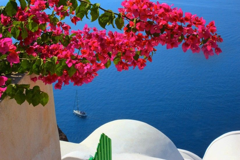 Photography - Scenic House Pink Flower Santorini Flower Bouganvillea  Wallpaper