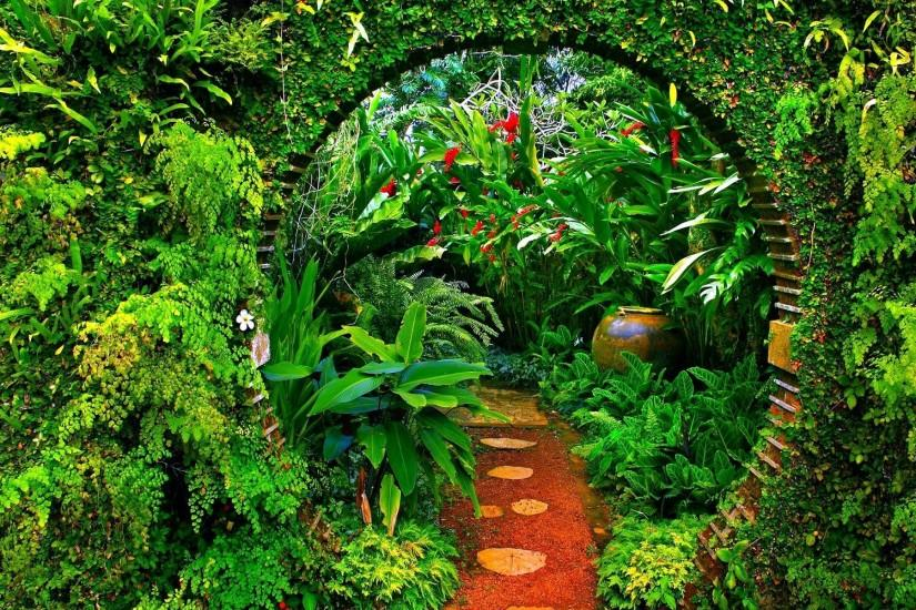 amazing jungle background 1920x1200 for ipad