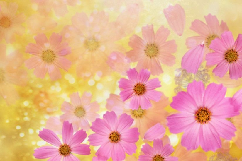 flower backgrounds | Cosmos flowers Wallpaper | High Quality Wallpapers, Wallpaper Desktop .
