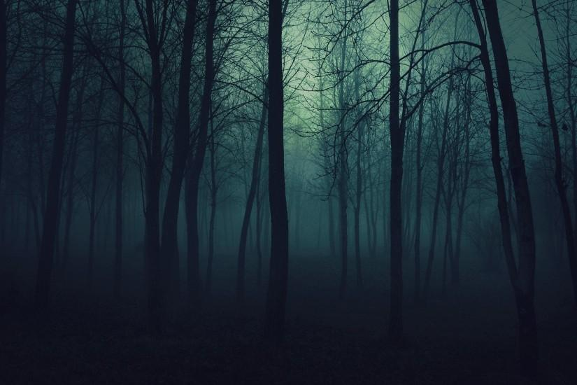 Dark Forest Wallpaper Photos Background #3do91fw168